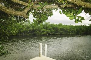 Manatee Creek